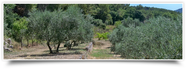 Olives Provence